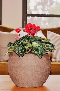 סטיילינג לבית עם פרחים טקסטיל וצבעים